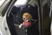 Assento Transpet Big para Cães e Gatos até 15Kg - Tubline - Imagem 2