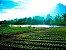 Aspersor Para Irrigação De Hortaliças P5 Rosca 1/2 C/6 Und - Imagem 2