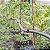 Gotejador Ajustável Para Irrigação 0 A 70 L/h - Kit 50 Und - Imagem 4