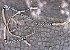 Conjunto Peitoral e Cabeçada Argolas Inox - Bege - Imagem 1
