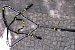 Conjunto Peitoral e Cabeçada Argolas Inox - Preto com Amarelo - Imagem 1