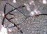 Conjunto Peitoral e Cabeçada Argolas Inox - Preto com Vermelho - Imagem 1