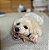 PET QWERKS TOYS Antler Wood - Imagem 5