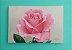 Quadro Flor Rosa - Tinta Óleo Sobre Tela 30x20cm - Imagem 2