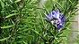 Vela Aromática de Alecrim 260g (Boa Saúde e Proteção) - Imagem 2