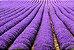 Vela Aromática de Alfazema 260g (Relaxante) - Imagem 2