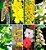 Vela Aromática de Floral 260g (elimina crenças limitantes) - Imagem 3
