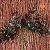 Flores artificiais - Imagem 3