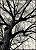 Árvore II - Imagem 1