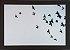 Pássaros - Imagem 1