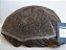 Prótese Capilar masculina  HD De Alta Definição - Tamanho 20X25  -  Cabelo 100% humano - Imagem 1