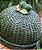 Boleira verde em vime com duplo limão D=35 x H=15 cm - Imagem 1