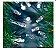 Cordão Fixo Com 100 Leds Fio Verde - Branco Frio - 10 Metros (M/F) - 110V - Imagem 3