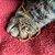 Colar de Cachorro e Gato Vazado - Dourado - Imagem 2