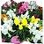 Flor Boca de Leão cx c/ 15 mudas - Imagem 1