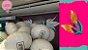 Balões metalizados 20 polegadas redondos personalizados - Imagem 5