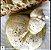 Burrata - Imagem 1