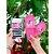 Chinelo Slide Any Malu Pink Fun Rosa Com Meia Grendene kids - Imagem 3