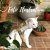 Peitoral Cat.Walker Bigodiva tamanho P Cinza - Imagem 5