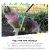 Peitoral Cat.Walker Bigodiva tamanho M Listrado Roxo - Imagem 2