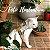 Peitoral Cat.Walker Bigodiva tamanho G Jeans Roxo - Imagem 5