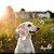 Pet Bolhas para cães e gatos - Imagem 3