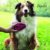 Escova Kong ZoomGroom para cães Azul - Imagem 1