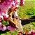 Perfume Aromaterapêutico Personalizado - Imagem 1
