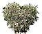 Coroa de Flores de Gipsofila Coração - Imagem 1