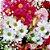 Buquê de Flores Campestre Grande - Imagem 3
