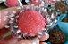 Doces sem lactose, aprenda como fazer, clique na imagem para saber mais. - Imagem 2