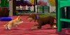 The Sims 3 Pets (Usado) - PS3 - Imagem 3