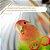 Sexado de Pájaros por ADN (Informe en Español) - Imagem 1