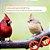 Similaridade Genética para Aves - Imagem 1