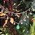 Colar Gota Esmeralda Colombiana Penduricalhos em Prata925 - Imagem 3