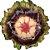 Bowl folha vitória régia P coleus escura  - Imagem 1