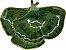 Folha Leque verde  - Imagem 1