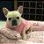 Enxoval para cachorro Good Dreams Pink - Imagem 6