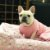 Enxoval para cachorro Good Dreams Pink - Imagem 5