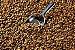 Malte Especial Brown Light Importado GoldSwaen - Imagem 1