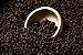 Cevada Torrada Barley Importada BlackSwaen - Imagem 1
