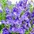 Scutellaria 250mg - Imagem 2