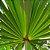 Saw Palmetto 160mg - Imagem 2