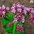 Valeriana 200mg - Imagem 2