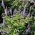 Vitex 500mg - Imagem 2