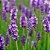 Desodorante Natural 120ml - Imagem 2