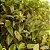 Xarope para Tosse Seca / Amarela 250ml - Imagem 2