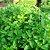 Vinagre com Ervas Verdes 240ml - Imagem 4