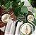 Sousplat - Costela de Adão Verde Claro - Imagem 2