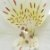 Astromélia Branca Pacote 10 Hastes - Imagem 2